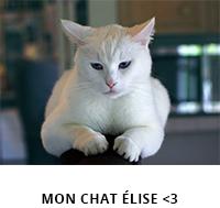 chat élise